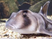 Haie - Räuber hinter Glas (Themenabend rund um den Hai)